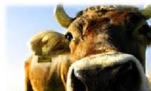 Gesunde Tiere - Gesunde Menschen